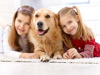 Best Way to Remove Pet Odor | Carpet Cleaning Moorpark CA