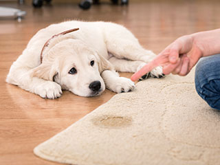 Low Cost Pet Stain Removal | Carpet Cleaning Moorpark CA